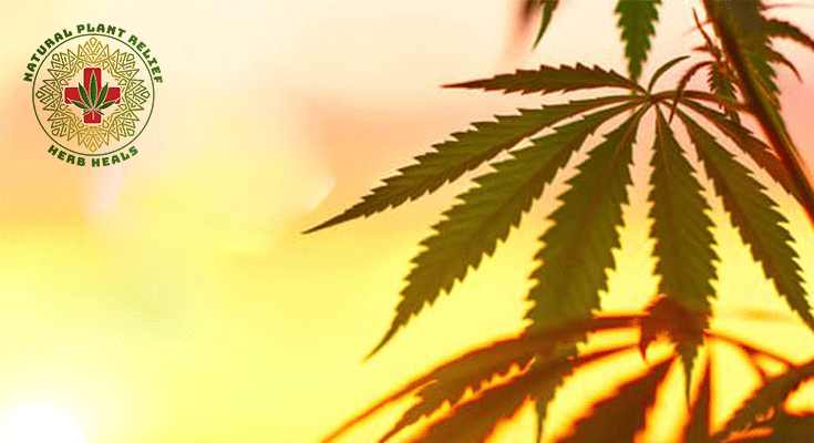 How is CBD Oil Made? How to Make CBD Oil at Home?