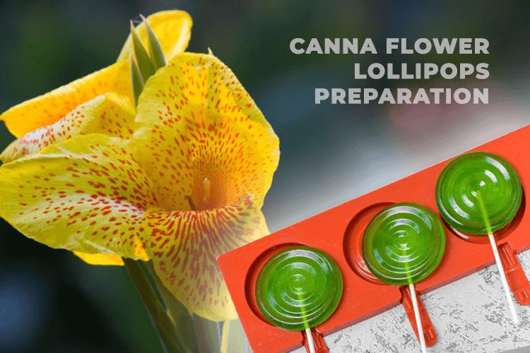 Canna Flower Lollipops Preparation