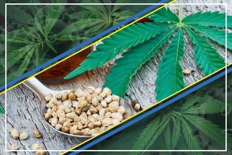 Sannabis Puts Its Hemp Export Dreams On Hold Amidst Covid-19 Outbreak