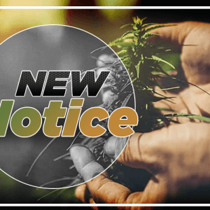 New guidance notice for hemp producers by the USDA