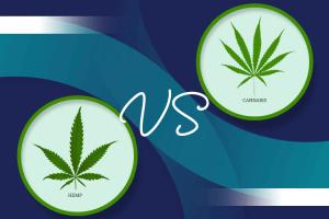 Hemp CBD Oil vs. Marijuana CBD oil, what is the difference?
